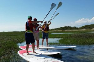 People on stand up paddle boards